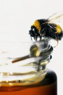 mierea la copii