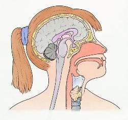 hipogonadism