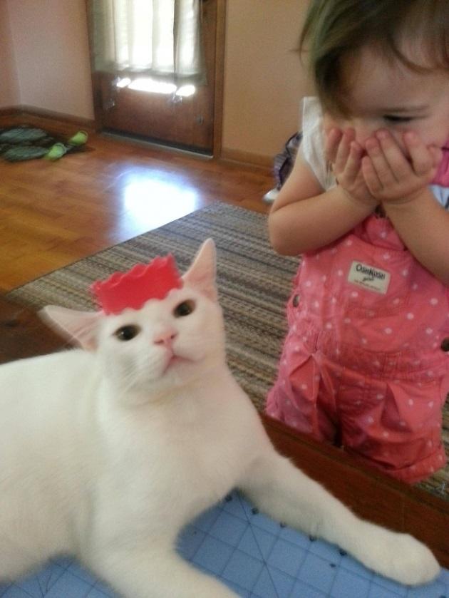 copil care rade de pisica