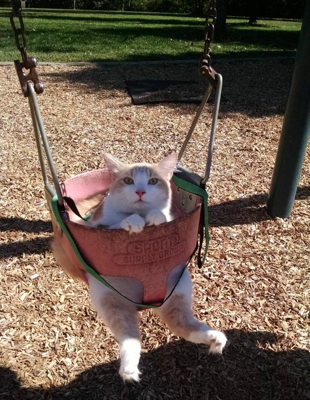 pisica in leagan